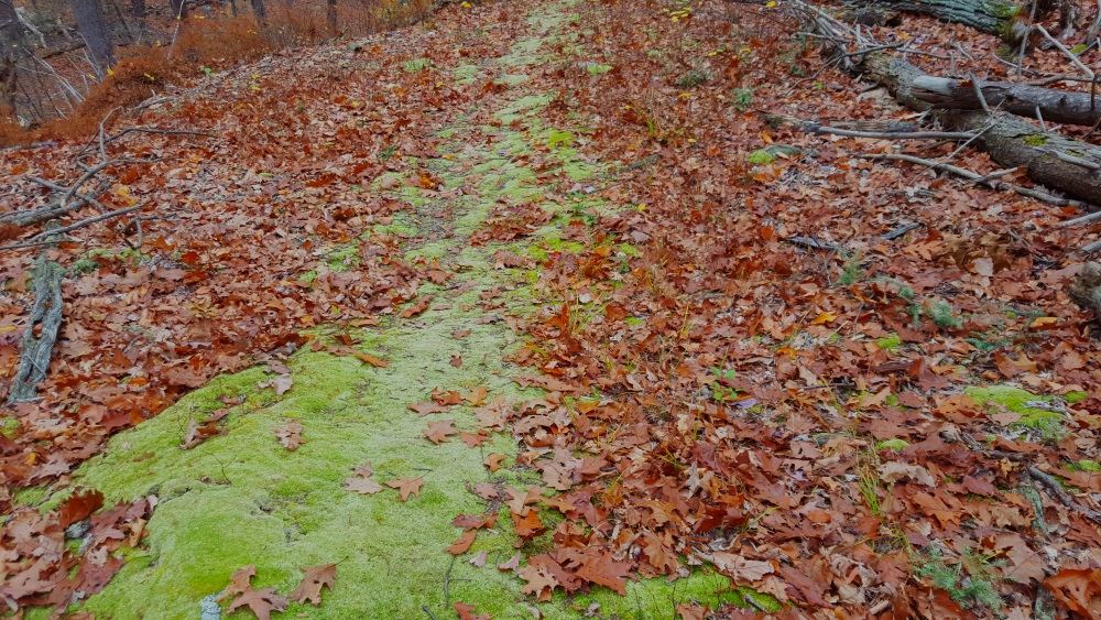 Manitoga Paths Moss