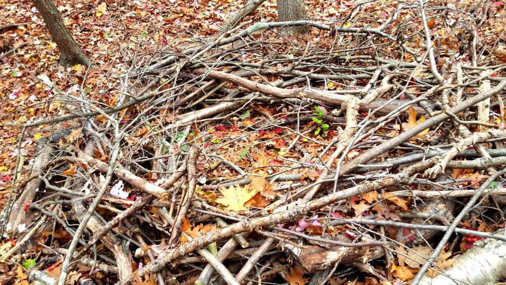 Manitoga Paths Nest for a Big Bird 2