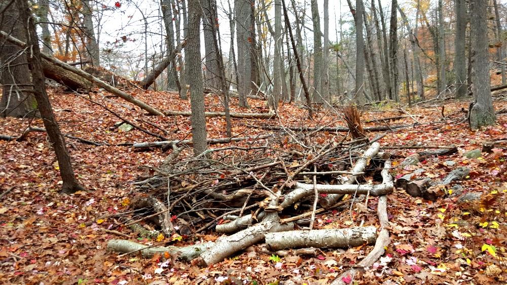 Manitoga Paths Nest for a Big Bird