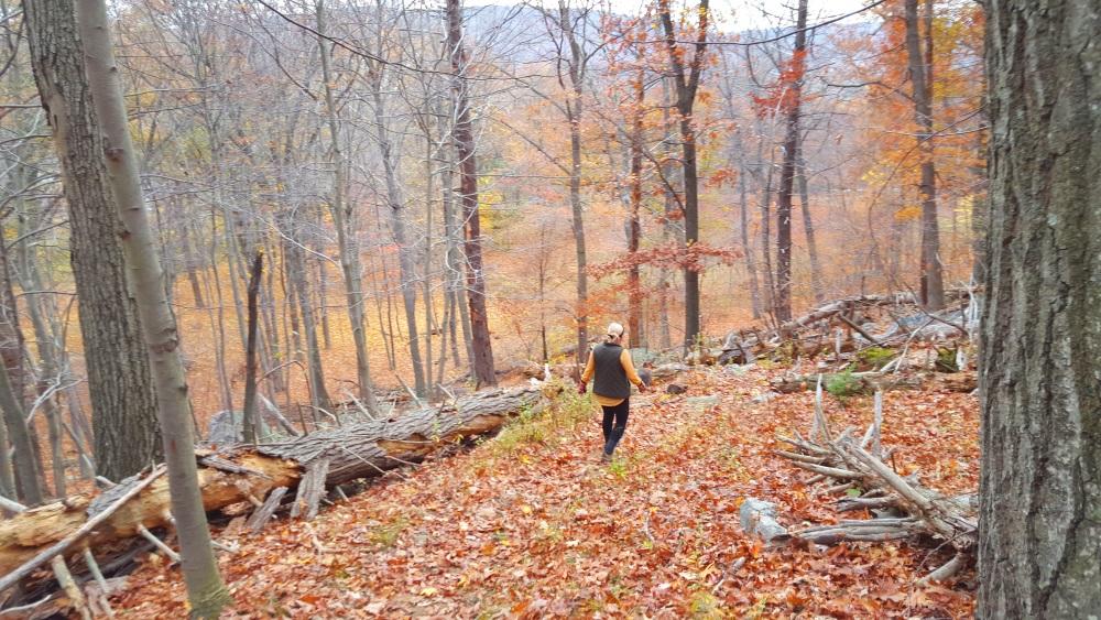 Manitoga Paths Walking back down