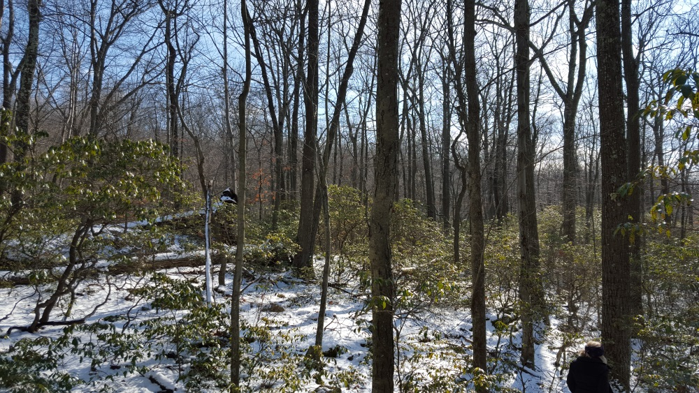 Charcoal Burner Woods with Laurel and Snow