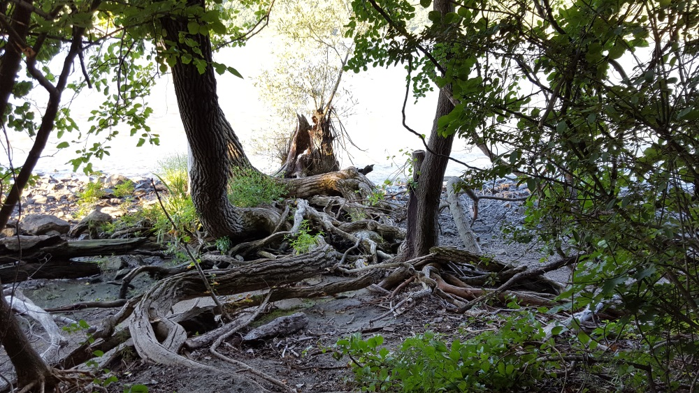 little-stony-pont-beach-cold-spring-twisted-roots